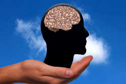 a hand holding a silhouette of a human head showcasing the human brain