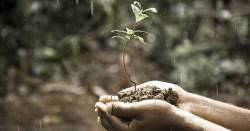 Hands holding soil and a seedling in the rain
