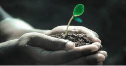 hands holding soil with a small green seedling
