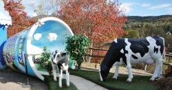 Plastic cows in a Ben and Jerry's display.