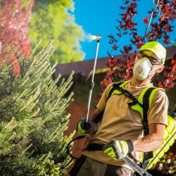 person in a mask and protective gear spraying pesticides on green and pink plants in a garden