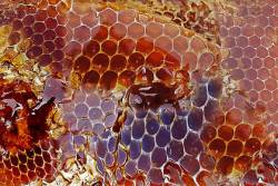 Honey dripping out of a honeycomb
