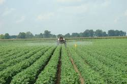 Insecticides, Pesticides