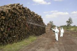 Insecticide being sprayed on pine lumber