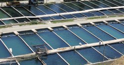 land-based fish farm