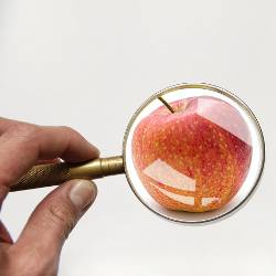Red and yellow speckled apple under a magnifying glass