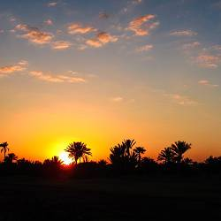 Sunrise over palm trees in Marrakech, Morocco
