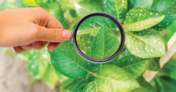Looking at a plant through a magnifying glass.