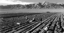 Migrant workers in California
