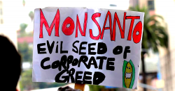 Monsanto: Evil Seed of Corporate Greed protest sign