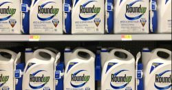 blue and white bottles of Monsantos glyphosate herbicide ROUNDUP on a store shelf