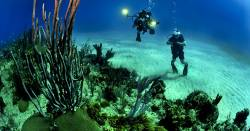 two scuba divers underwater photographing the coral reef