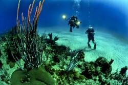 Divers at the ocean floor by a coral reef