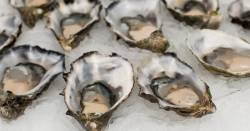 oysters on the half shell in ice