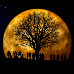 People together by tree of life in front of a bright moon