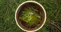 pine tea with evergreen needles