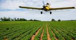 yellow air plane flying over a farm crop field spraying herbicide over the plant rows