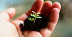 hand holding a clump of soil with a small set of green seedling plants growing in it