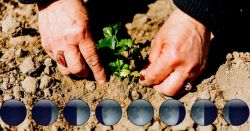 planting herbs in soil by the phases of the moon