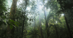 view of rainforest trees from forest floor
