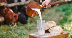 person pouring a glass of raw milk on a cutting board with bread in a dairy farm field with cows behind a fence