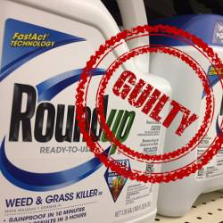 blue bottle of Monsantos Roundup herbicide on a shelf with a red rubber stamp over it that says GUILTY