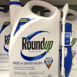 blue and white bottle of Monsantos glyphosate herbicide ROUNDUP on a store shelf