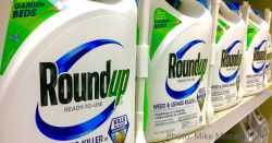 Monsantos glyphosate Roundup bottles on a store shelf