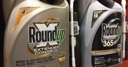 silver and gold bottles of Monsantos glyphosate herbicide ROUNDUP