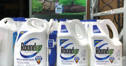 Roundup jugs sitting on display on store shelf