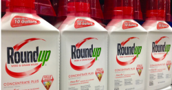 Bottles of Roundup weed and grass killer on store shelf