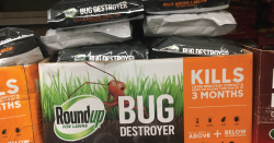 Roundup for lawns.