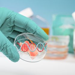 scientist in a laboratory with blue gloves holding a petri dish of meat and a double helix of dna