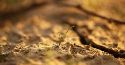 small seedling sprouting up in dry cracked soil
