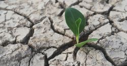 small green seedling in a field of dry cracked soil