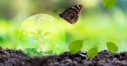 seedling plant encased in the planet earth with a butterfly and falling leaves on black soil