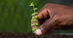hand planting a seedling into rich soil
