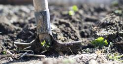 shovel digging into soil to plant strawberries