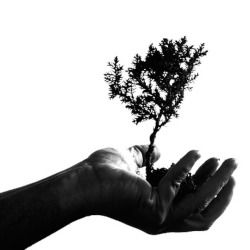silhouette of a hand holding a small tree or plant