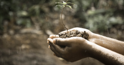 hands holding soil with a sprout