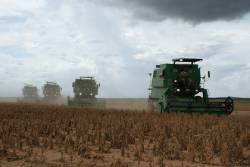 Soy crop harvest machinery