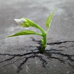 Sprouting seedling growing out of a crack in the asphalt