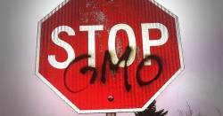 red stop sign with graffiti stating STOP GMO
