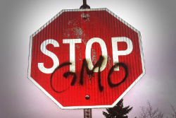 Stop GMO Stop Sign
