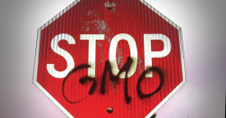 "Stop Sign that reads ""stop GMOs"""