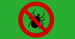 silhouette of a tick with a red NO symbol