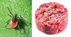 Tick and meat.