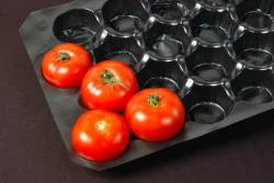 Tomatoes in a plastic shipping carton
