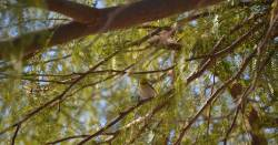 small bird sitting on a branch in a tree with small leaves