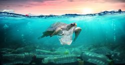 turtle swimming in the ocean near a plastic bag and pollution